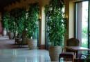 biljke u domu