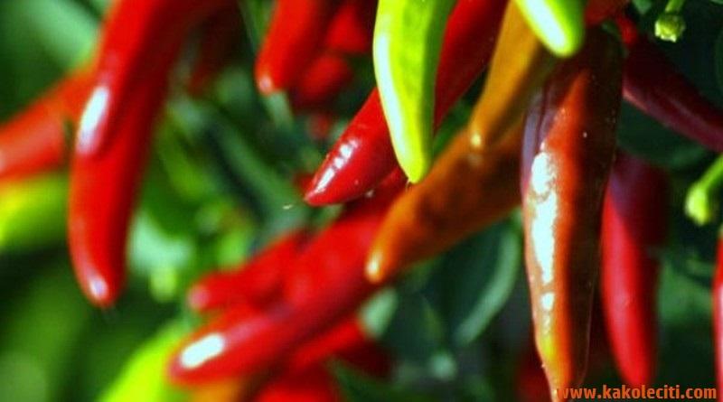 kakoleciti_ljuta-paprika-3